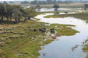Elephants along the river