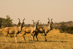 Kudu come visit us?